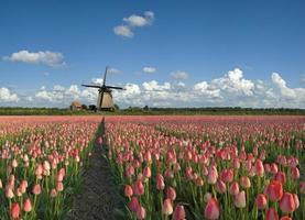 tulpaner och väderkvarn foto