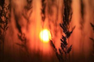 solnedgång dimma sommarfält foto