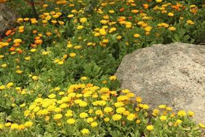 gula blommor och en sten