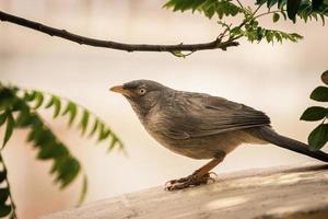 närbild av en fågel