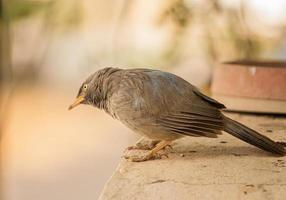 brun fågel på betong