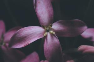 närbild av en lila blomma