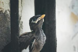 närbild av en baby fågel foto
