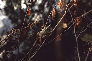 liten trädgroda på en brun stam under höstsäsongen foto