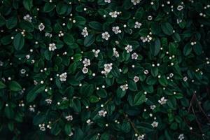 små vita blommor med gröna blad