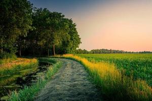 väg som leder in i en skog under solnedgången