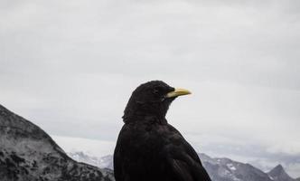 närbild av en svartfågel foto