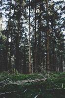 höga träd och grönt gräs