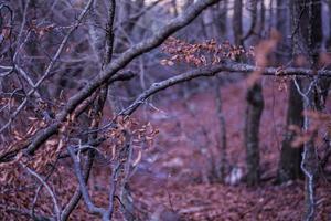skog på natten