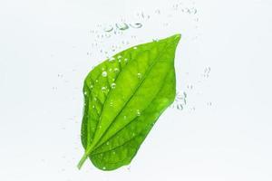 grönt blad och bubblor i vattnet