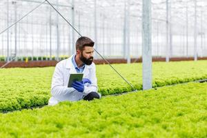 forskare som studerar i växthuset