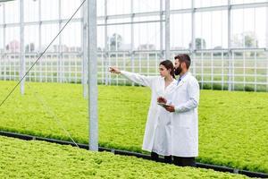två forskare man och kvinna undersöker grönska med en tablett i ett helt vitt växthus