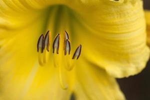 grunt fokus fotografering av gul blomma foto