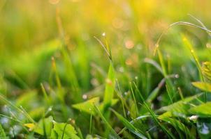 natur bakgrund med gräs vid solnedgången