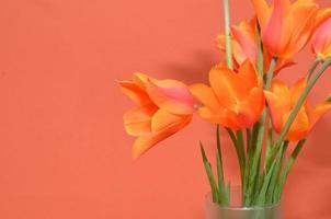 orange tulpaner