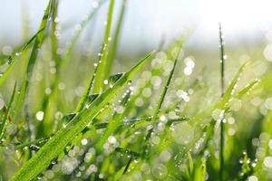 färskt grönt gräs med daggdroppar foto