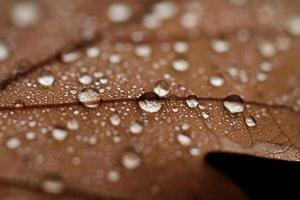 fallna löv täckta med regndroppar