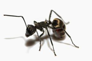 svart myra närbild