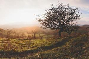 landsbygden vid gyllene timmen