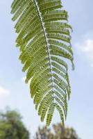 närbild av ett ormbunkeblad