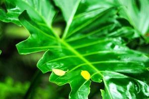 tropiska gröna blad
