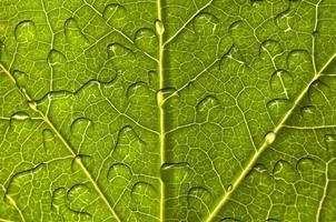 närbild av ett grönt blad med regndroppar bakgrund
