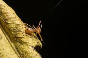 spindel på ett blad, närbild