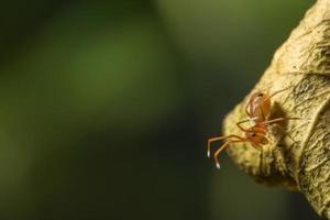 spindel på ett blad, närbild.