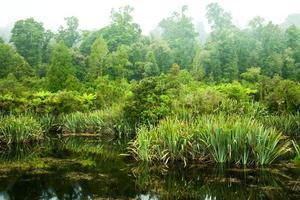regnskog träsk foto
