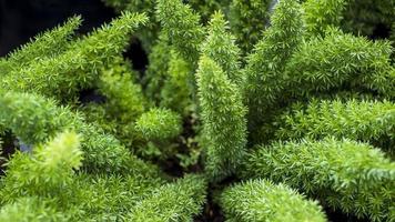 grön ormbunke närbild foto