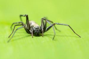 makro spindel på ett blad foto