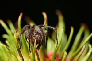 makro spindel på en blomma foto