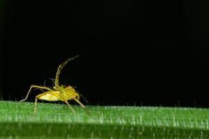 spindel på ett grönt blad foto