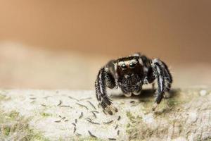 spindel på ett träd, närbild