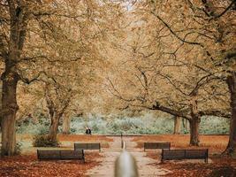 höst i parken foto
