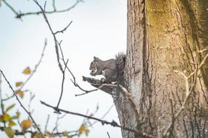 ekorre på ett träd