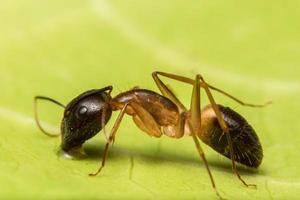 brun myra makro