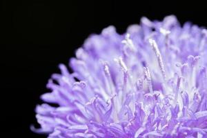 lila blommor närbild