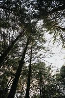 gröna träd i en skog foto