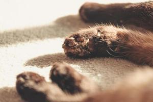 närbild av kattens tassar