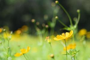 landskap med blommor som representerar hösten