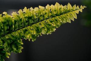 grönt ormbunkeblad