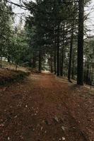 gångväg i en skog foto