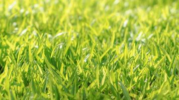 soligt grönt ängfält