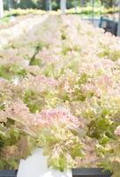 massa röda korallväxter foto