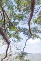 träd och en blå himmel foto