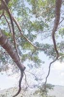 trädgrenar och himlen foto