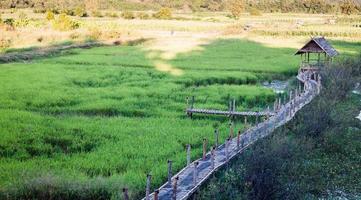 Chiang Rai, Thailand, 2020 - ett grönt risfält foto