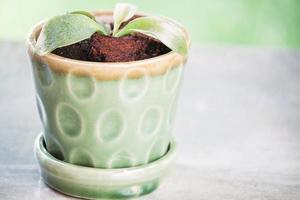 grön gro i en keramisk kruka foto
