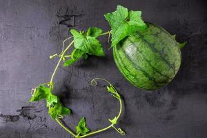 färsk vattenmelon och blad